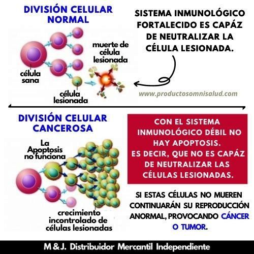 División celular normal y cancerosa